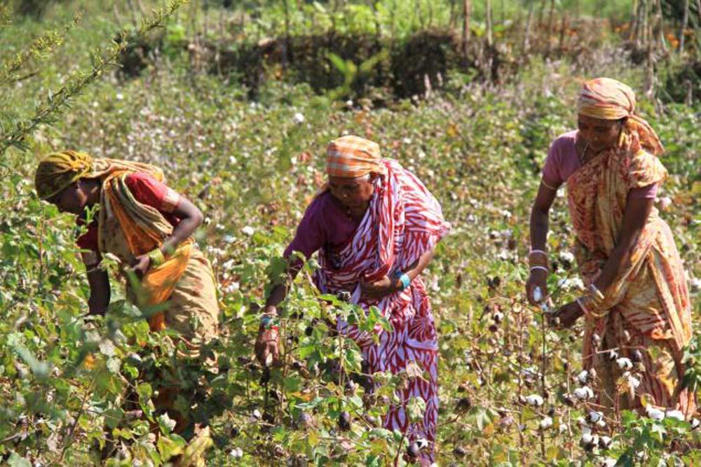 Seed Rakhi (1)