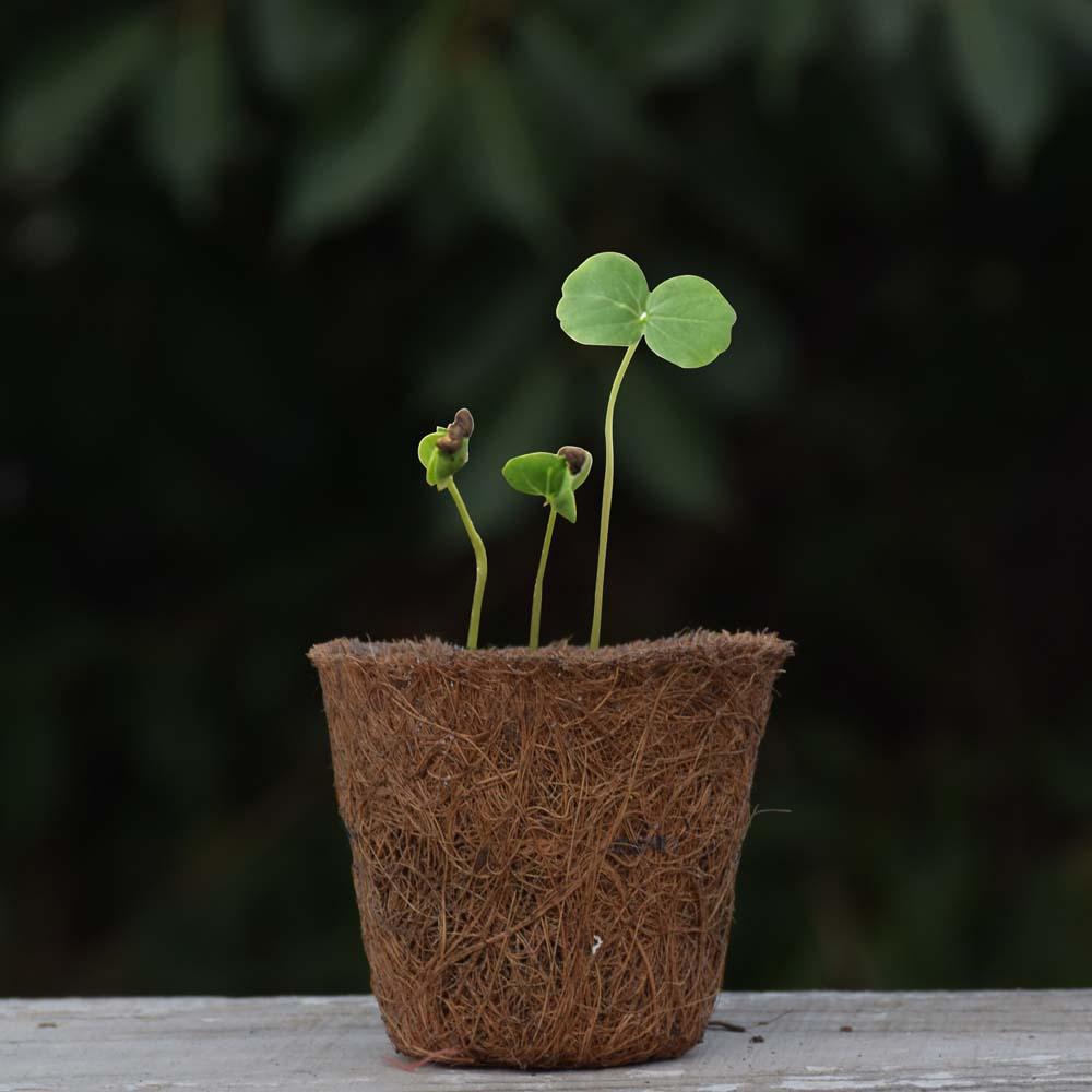 Seed Rakhi (19)
