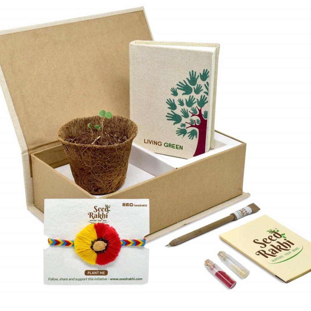 Seed Rakhi (8)